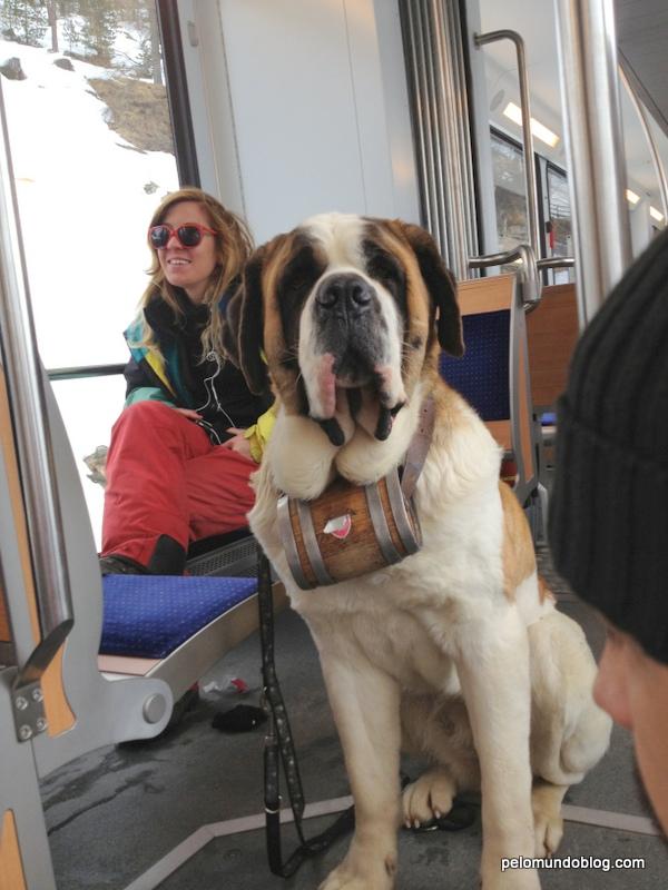 Tava na montanha e desceu no mesmo trem da gente. Lindo!