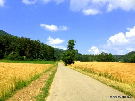 Lá vamos nós no meio da plantação de trigo.
