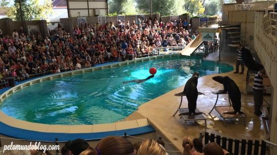 O show dos leões marinhos.