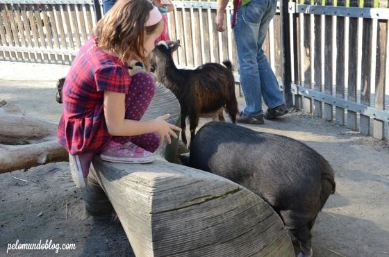 Ana Julia e o porco.
