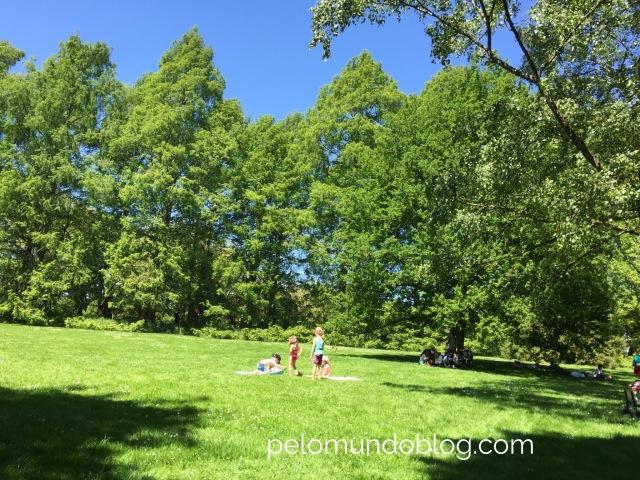 Muito espaço para picnic.